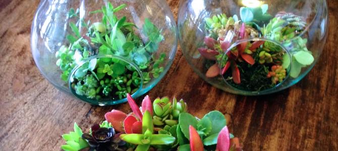 WS参加者募集:多肉植物でテラリウムを作ろう!@ JIYUGAOKA GREEN HALL&SALON