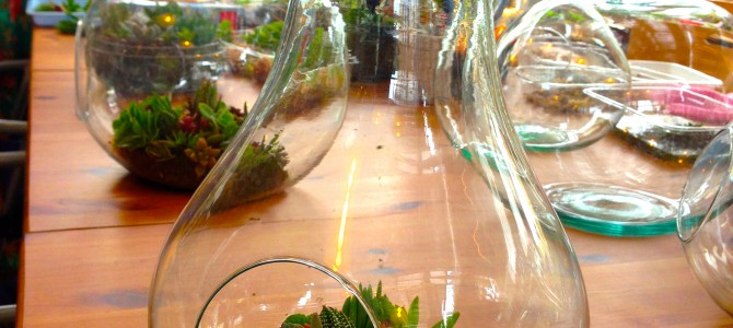WSレポート:多肉植物でテラリウムを作ろう!@ JIYUGAOKA GREEN HALL&SALON